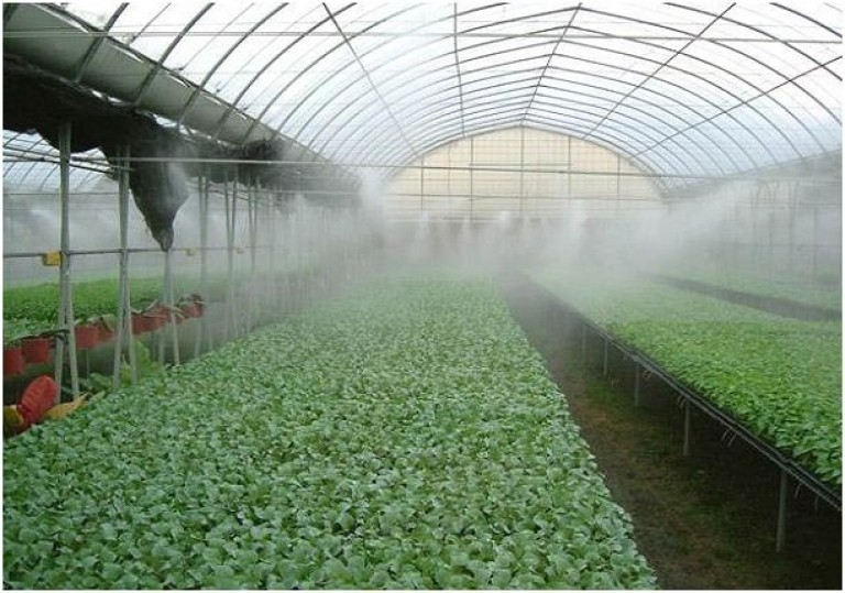 Собственное производство растений