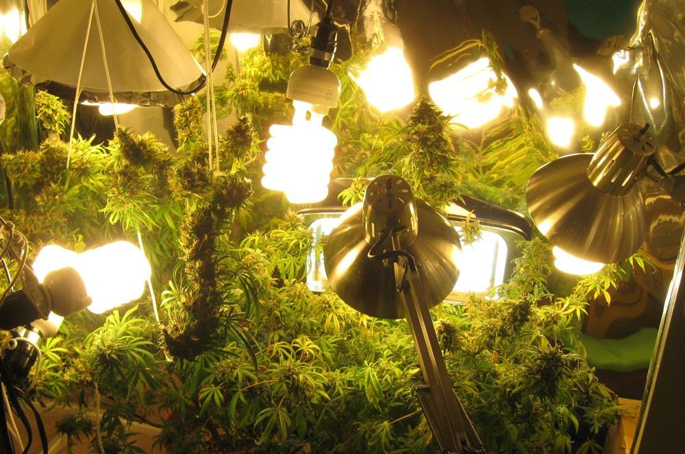 Какой свет лучше для марихуаны марихуана ленинград скачать