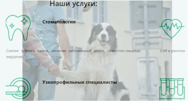 Срочная и профессиональная помощь животным в ветлечебнице «Терра веет центр» Харькова