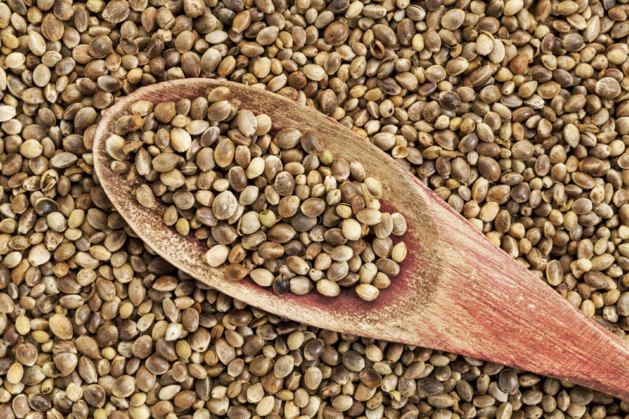 Семена конопли чем полезны как конопля вызывает опьянение