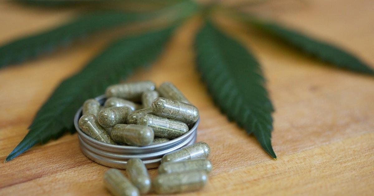 Обезболивающие из конопли как правильно вырастить дома марихуану