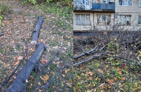 Варварские действия управляющей компании Фрунзенского района привели к вырубке деревьев